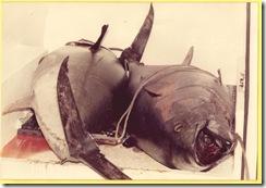 papa y su pesca atun 1988